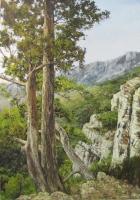 Картина художника Сосны у скалы